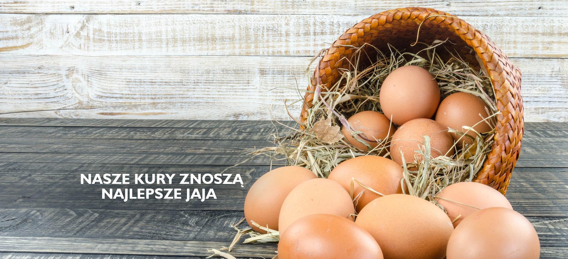 <a href='http://wybieganekury.pl/essential-mockup-design/'></a>